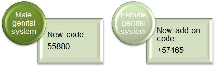 Genital system code changes 2021